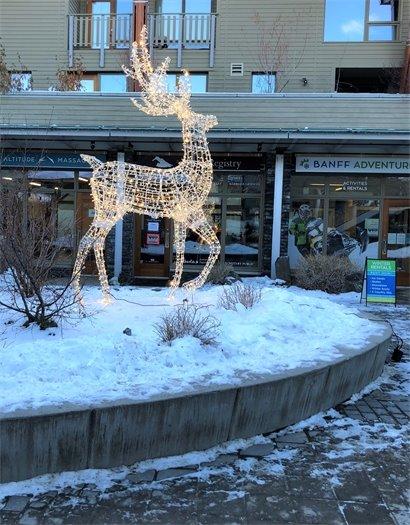 Deer returns to Bison Courtyard