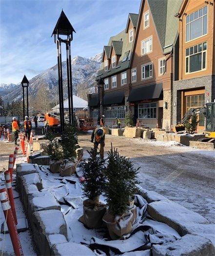 Street poles and Christmas Trees - Photo