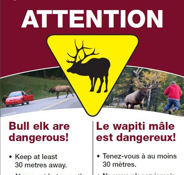 Elk Rut Warning